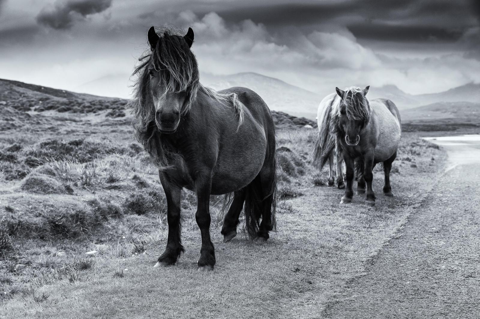 Eriskay Pony VII Mono