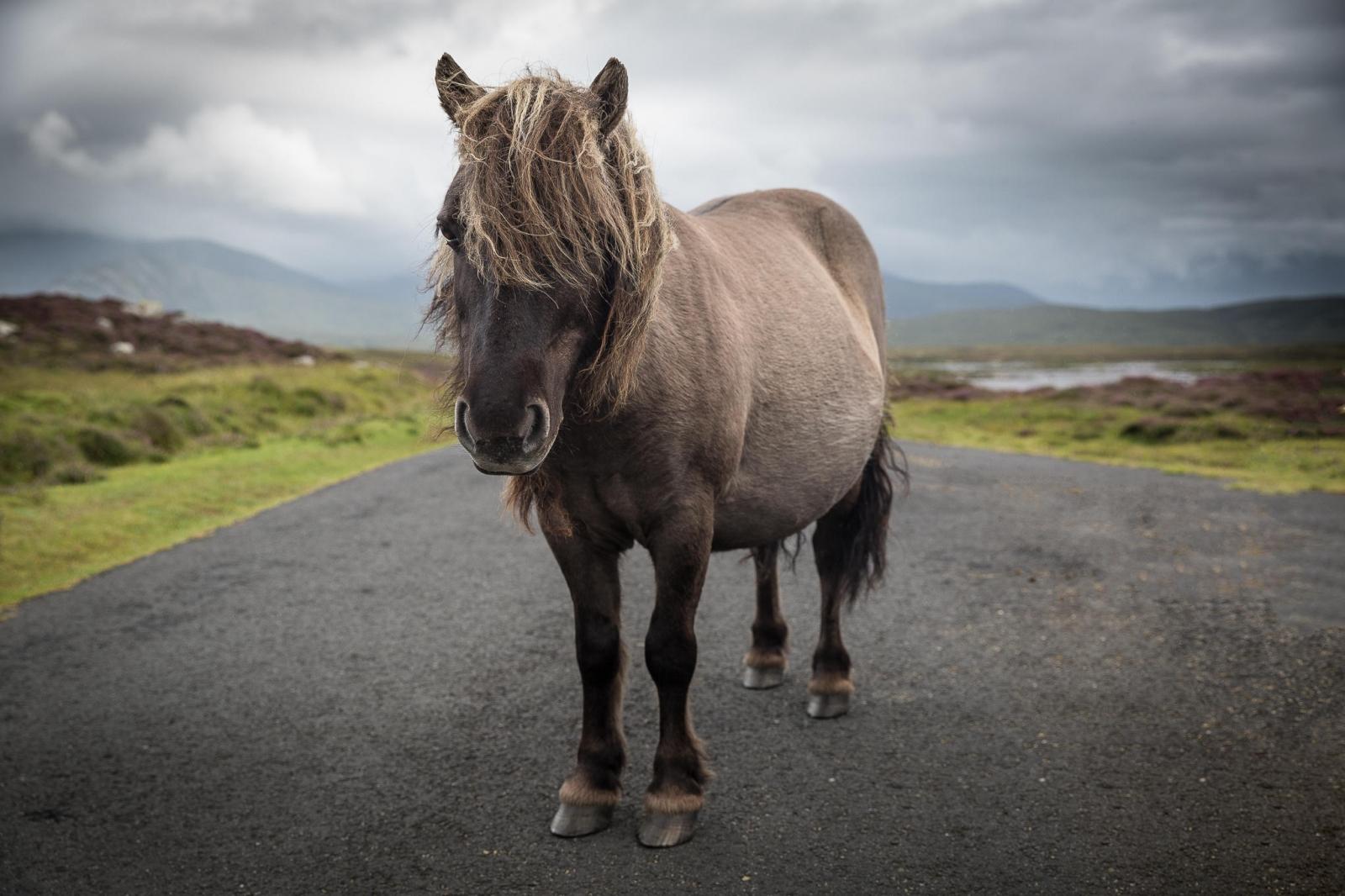 Eriskay Pony I Original
