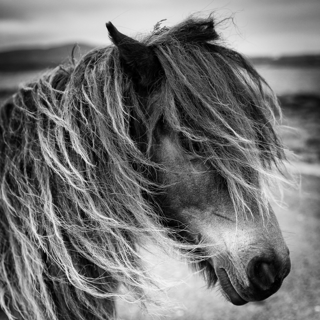 Eriskay Pony III Mono