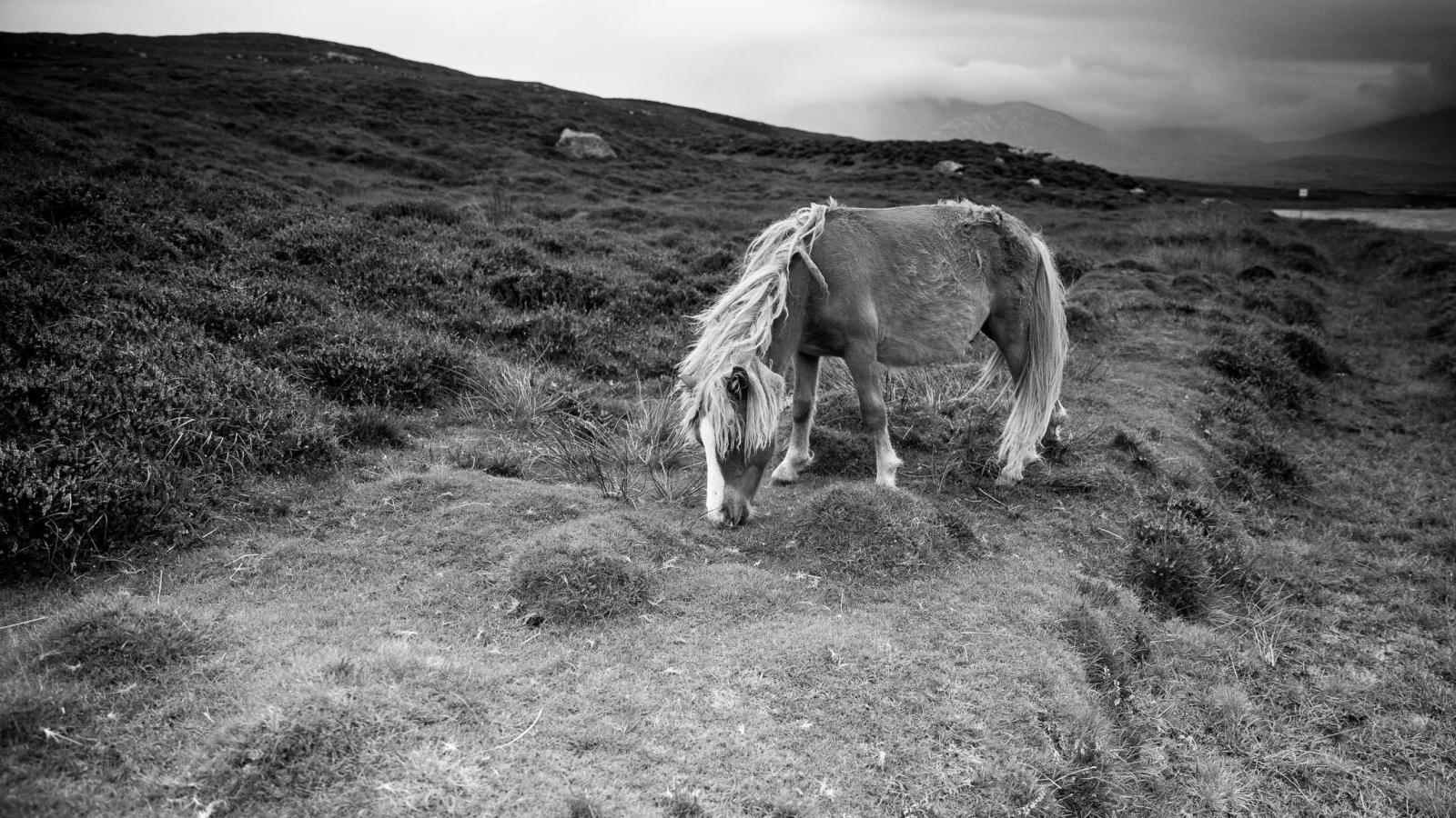 Eriskay Pony XIV Mono