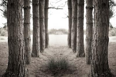 Leadling Lines