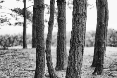 Trees - Group