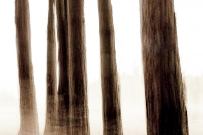 Trees - III