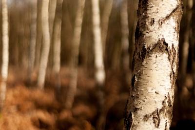 Trees - Lean
