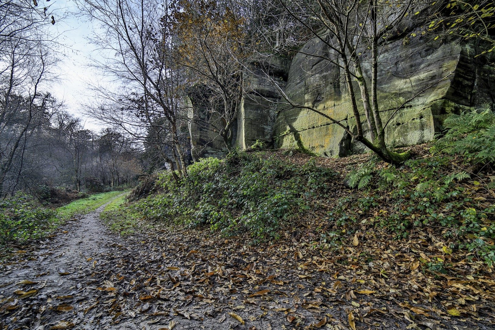 Eridge Rocks, Roods, Walks, path, Rich Clark Images